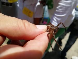 大きな(?)クモが救出(?)されました